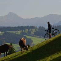 Radfahren_Scheidegg-Tourismus_FOTO_Wolfgang_Kleiner